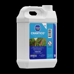 CHANTICO®